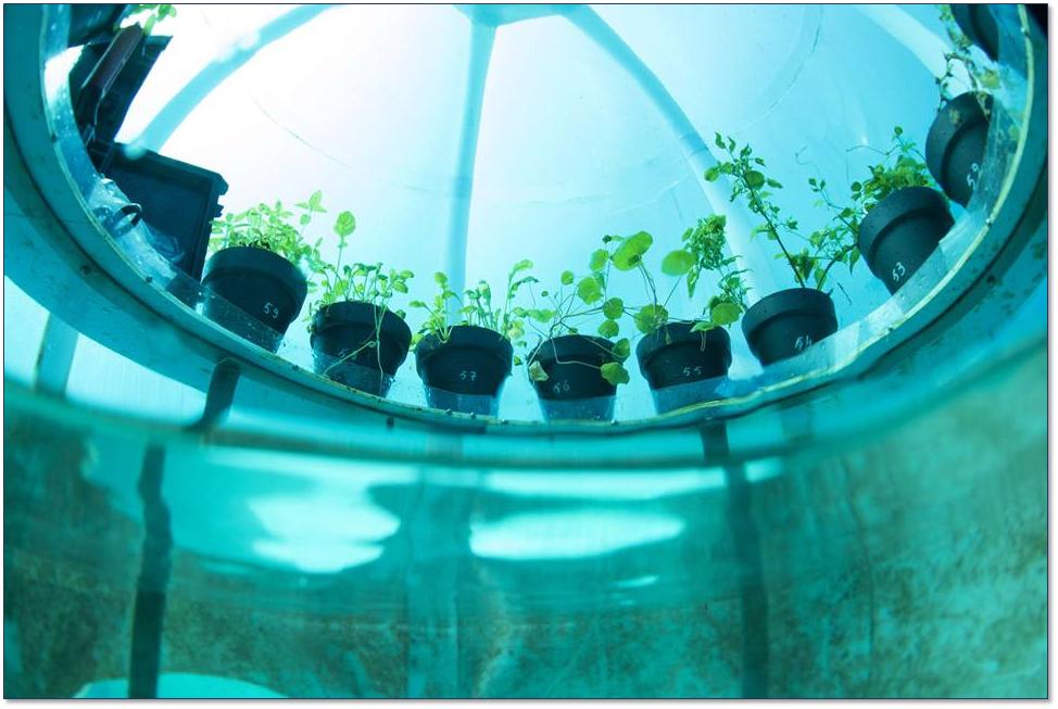 Il superbasilico che cresce in fondo al mare, Università di Pisa partner del progetto l'Orto di Nemo