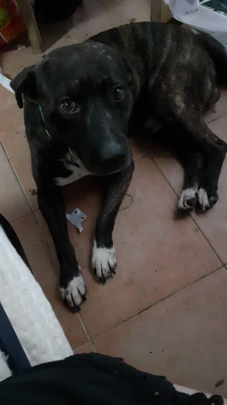 Si separano e lasciano il cane da solo in casa: Tigro cerca adozione, è al canile di Viareggio