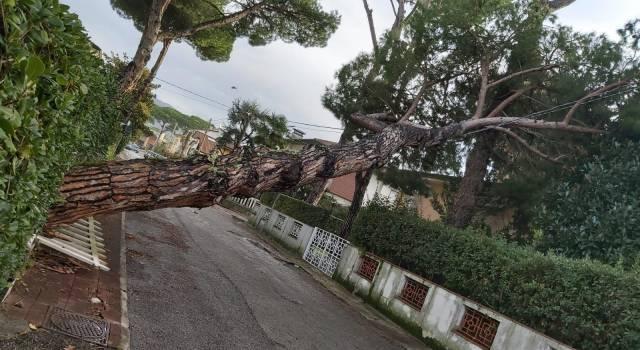 Cade un albero a Lido di Camaiore, smottamento a Pedona
