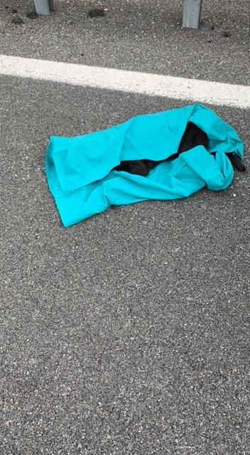 Carambola in A12, la Polstrada ricostruisce la dinamica: il cane morto, schiacciato tra i sedili, era legato alla cintura di sicurezza