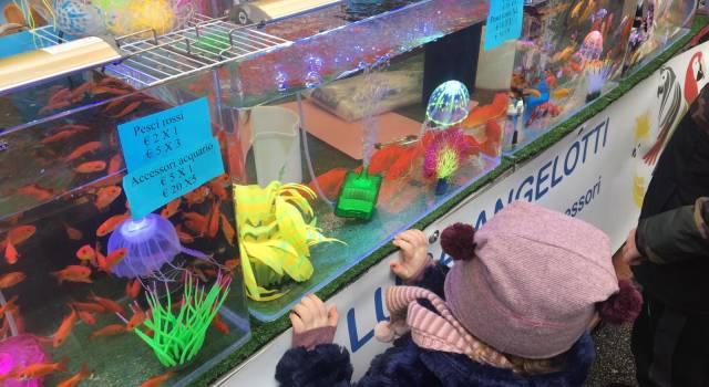 Camaleonti, gufi e scoiattoli volanti, l'Arcà di San Biagio incanta i bambini