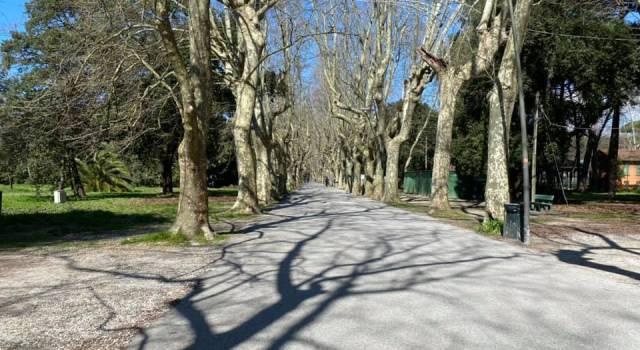 A Viareggio riparte il Teatro Estate in pineta