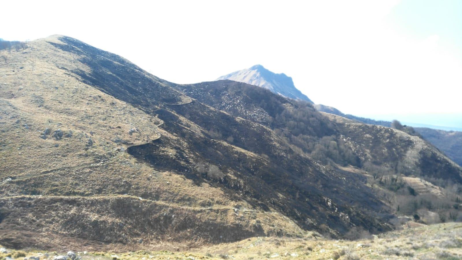 Spento l'incendio di Camaiore, in cenere18 ettari