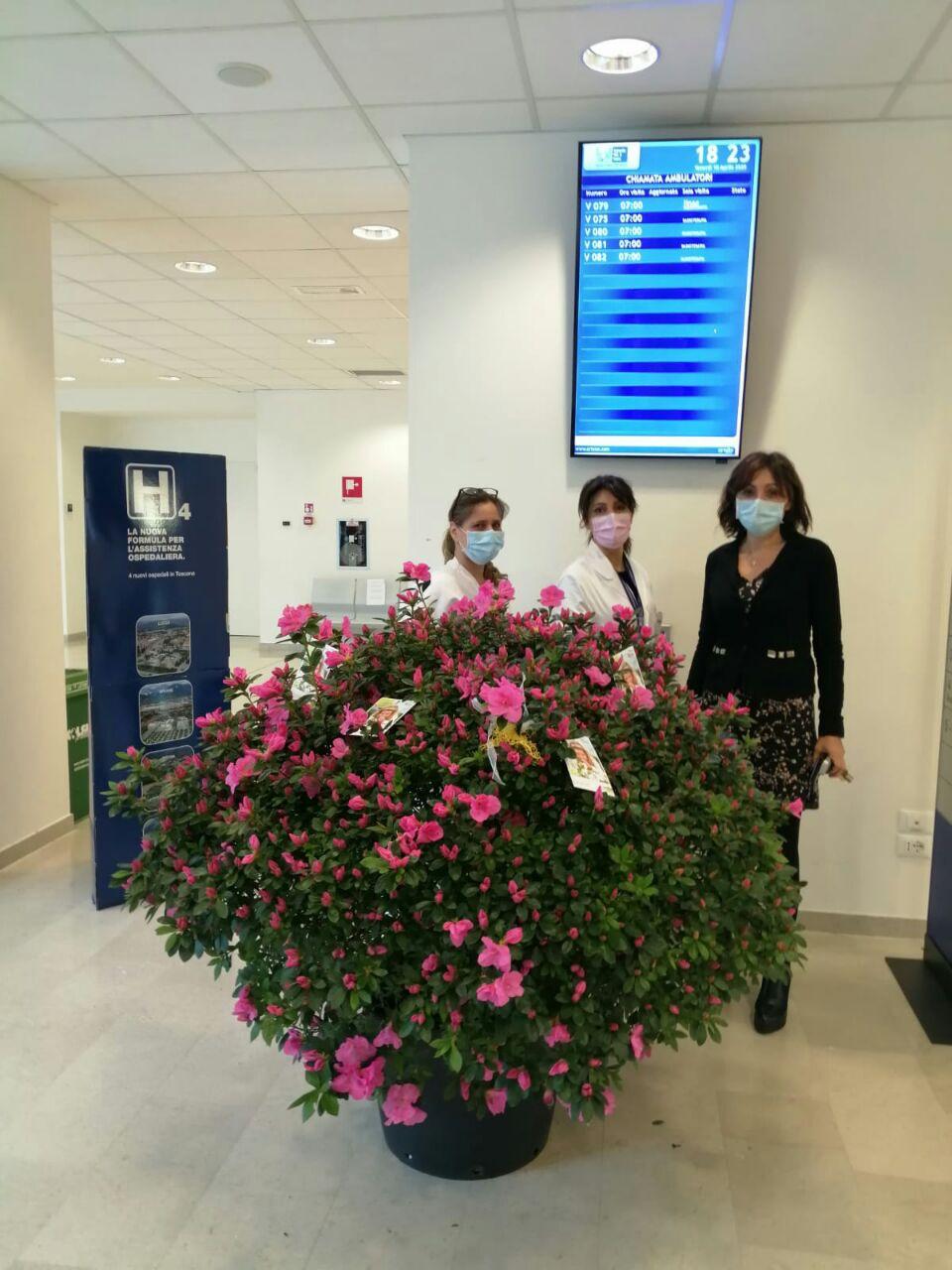 Mille azalee dei vivai di Borgo a Mozzano colorano l'ospedale per le feste di Pasqua