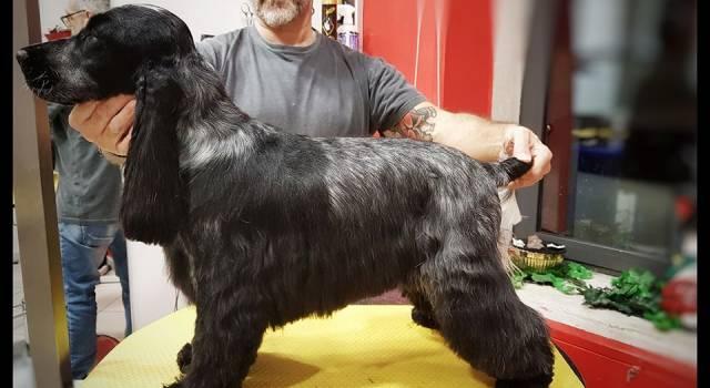 """Toilette per cani ancora chiuse per il lockdown, appello di Roberto Salvatori al sindaco di Viareggio: """"Molti hanno dermatiti, è una questione sanitaria"""""""