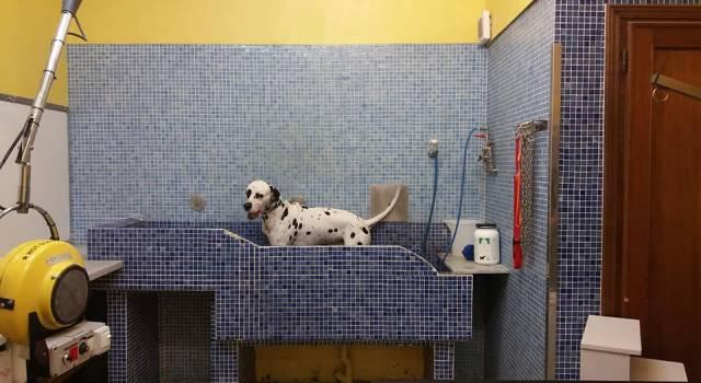 Toilette per cani e addestratori possono riaprire: nuova ordinanza toscana. Ecco tutte le novita