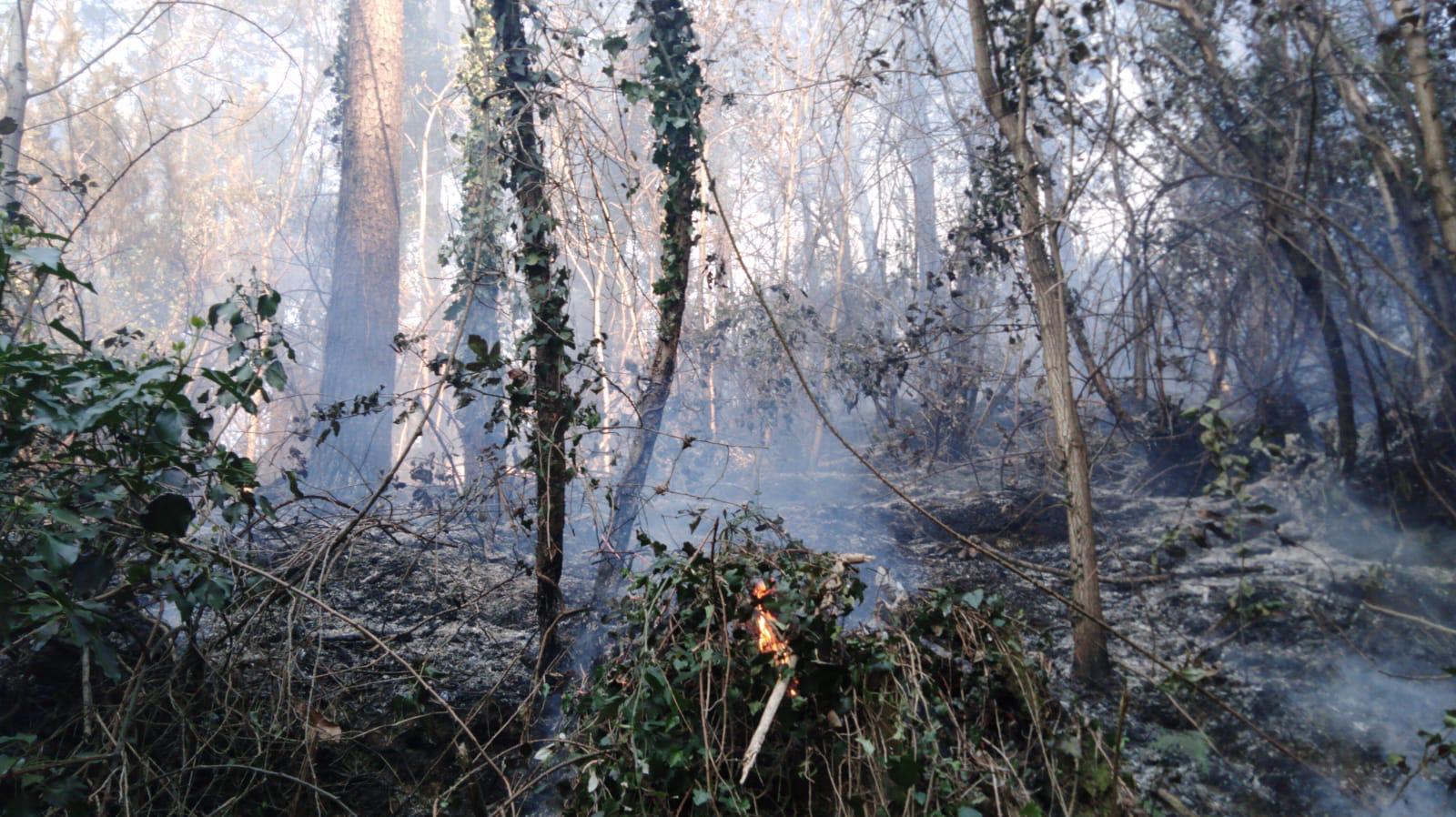 Incendio a Camaiore, fiamme in zona Nocchi