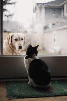 Coronavirus, cani e gatti: la Federazione Nazionale Ordini Veterinari Italiani fa chiarezza