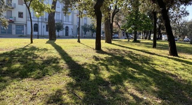 Disinfestazione zanzare, cura del verde e asfaltature: ripresi i lavori a Viareggio