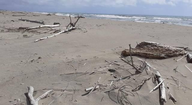 Pulizia della spiaggia della Lecciona, appuntamento il 20 settembre