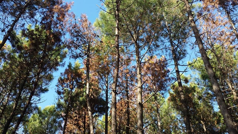 Parco sempre più accessibile: da oggi, 18 maggio, la Tenuta di San Rossore è raggiungibile con i mezzi privati