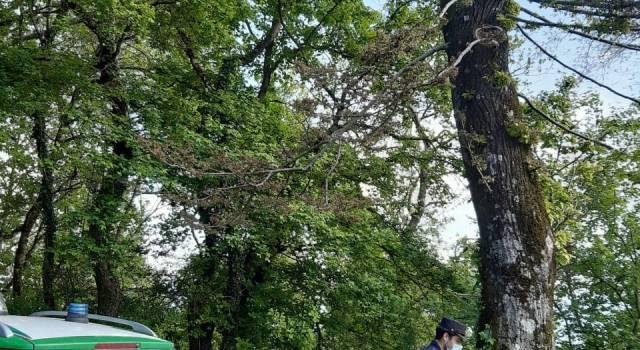 Pensionato denunciato per aver avvelenato una trentina di alberi per provocarne il disseccamento