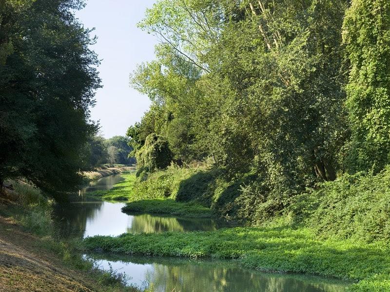 Fase 2, da lunedi 4 maggio riapre il Parco di Migliarino – San Rossore – Massaciuccoli