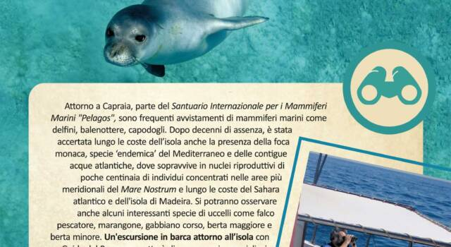 Sea watching con il Parco nazionale Arcipelago Toscano all'Isola di Capraia