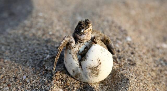 Tartalove, evento a Forte dei Marmi: l'arte a sostegno dell'ambiente, una donazione per le tartarughe marine
