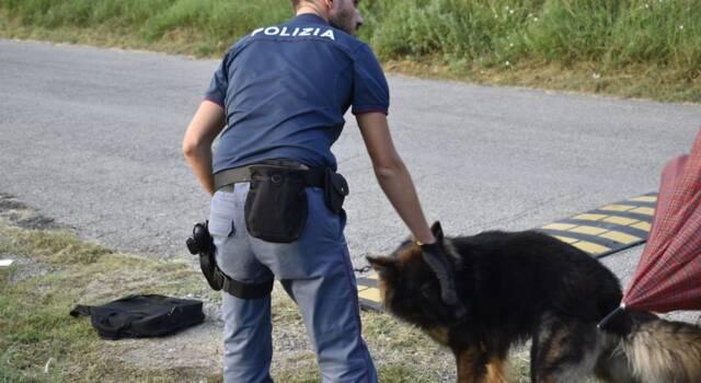 Pastore tedesco si accascia a terra con difficoltà respiratorie: salvato dalla Polizia