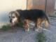 Vecchietto, sordo e cieco ma sano: Lillo cerca adozione, non lasciamo solo in canile