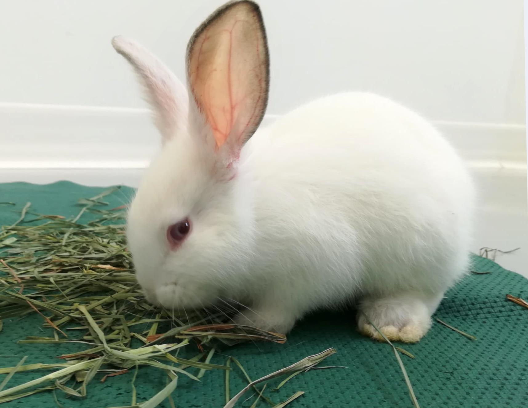 """Gli """"Amici di Ettore"""" si mobilitano per i coniglietti abbandonati"""