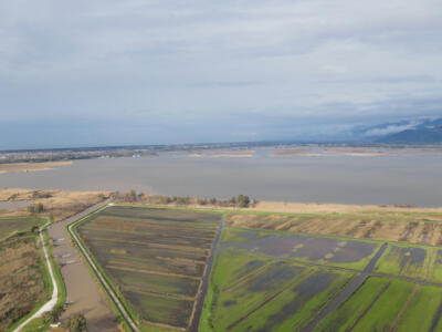 Resta alta la preoccupazione per le condizioni del Lago di Massaciuccoli, ancora sopra la soglia di guardia