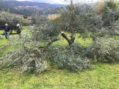 Vandalismo su piante di olivo, la condanna dell'amministrazione comunale