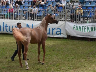 L'Arte del Cavallo coglie ancora nel segno, grande successo in Versiliana per la manifestazione equestre