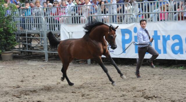 """Al via """"L'Arte del Cavallo"""" al 42esimo Festival La Versiliana"""