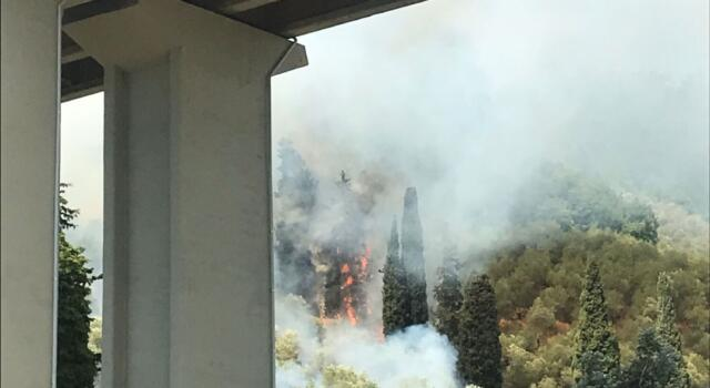 Incendio a ridosso della bretella Lucca-Viareggio